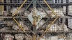 ಪ್ರತಿ ಲೀಟರಿಗೆ 38 ಕಿ.ಮೀ ಮೈಲೇಜ್ ನೀಡುತ್ತದೆ ಕೋಳಿ ತ್ಯಾಜ್ಯದಿಂದ ತಯಾರಾಗುವ ಈ ಬಯೋ ಡೀಸೆಲ್