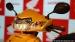 ಬಿಡುಗಡೆಯಾಗಲಿರುವ ಹೋಂಡಾ ಆಕ್ಟಿವಾ 6ಜಿ ಸ್ಕೂಟರ್ ವಿಶೇಷತೆ ಏನು?